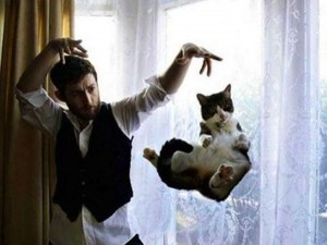 Perfectly Timed Cat Photos (40 photos) 36