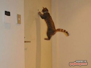 Perfectly Timed Cat Photos (40 photos) 37