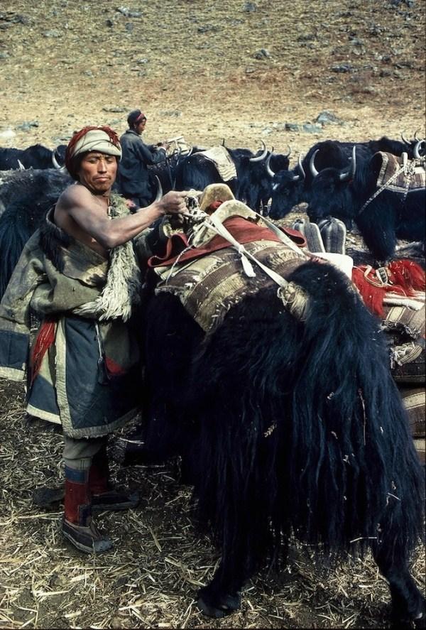 418 Caravans Of The Himalaya (25 photos)