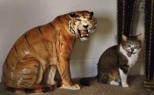 Perfectly Timed Cat Photos (40 photos) 4