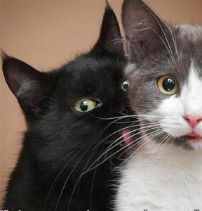 Perfectly Timed Cat Photos (40 photos) 5