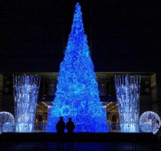 World's Best Christmas Trees (10 photos)