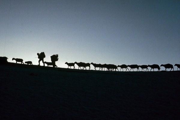 718 Caravans Of The Himalaya (25 photos)