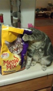 Perfectly Timed Cat Photos (40 photos) 7