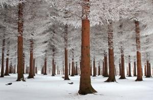 Magnificent Snowy Landscapes (20 photos) 7