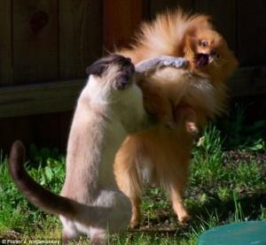 Perfectly Timed Cat Photos (40 photos) 8
