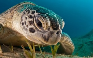 Amazing Underwater World (32 photos) 33
