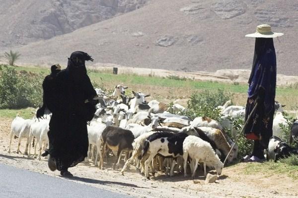 "1012 Witches"" of Yemen (16 photos)"