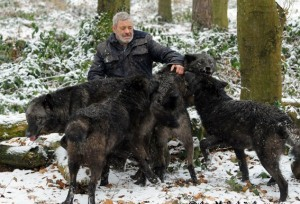 Living With Wolves (30 photos) 11