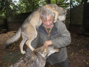 Living With Wolves (30 photos) 12