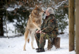 Living With Wolves (30 photos) 15