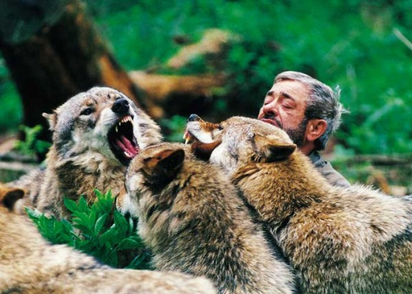 1634 Living With Wolves (30 photos)