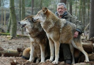 Living With Wolves (30 photos) 17