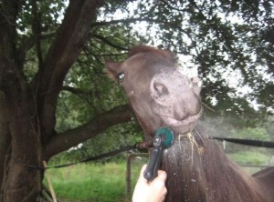 Horse Bitten by Poisonous Snake (28 photos) 18
