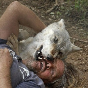 Living With Wolves (30 photos) 24
