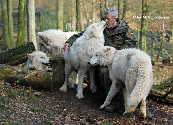 2721 Living With Wolves (30 photos)