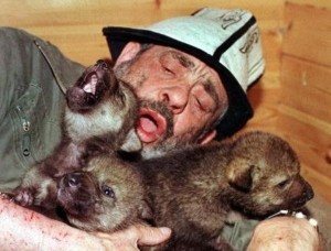 Living With Wolves (30 photos) 28