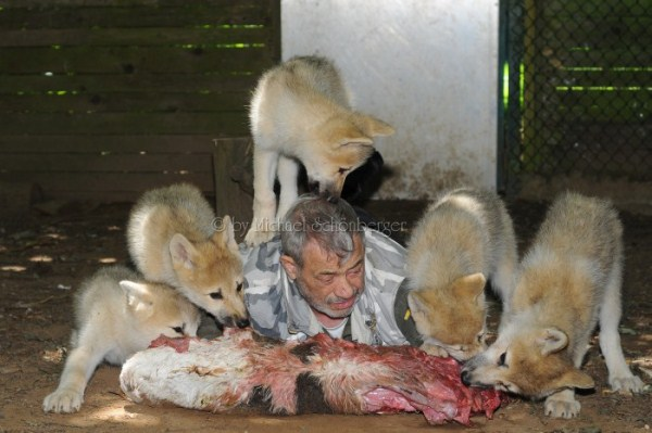 2918 Living With Wolves (30 photos)