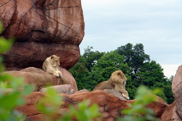 424 Worlds Largest Zoos (8 photos)