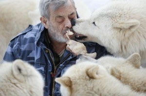 Living With Wolves (30 photos) 4