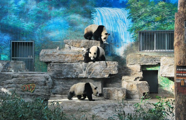 620 Worlds Largest Zoos (8 photos)