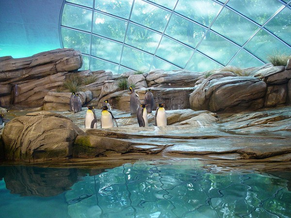 720 Worlds Largest Zoos (8 photos)