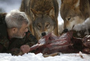 Living With Wolves (30 photos) 7