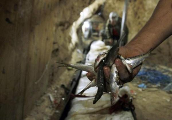1027 Οι σήραγγες της Γάζας (20 φωτογραφίες)