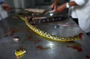 Snake Town in China (18 photos) 16