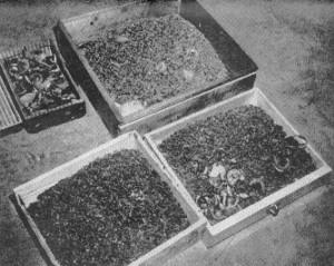 Holocaust Photos (37 photos) 25