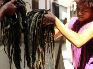 Production of Snakeskin Handbags (22 photos) 2