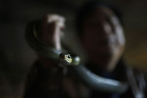 Snake Town in China (18 photos) 3