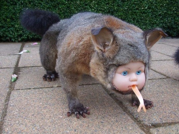 Trully Bizarre Taxidermy (15 photos) 4