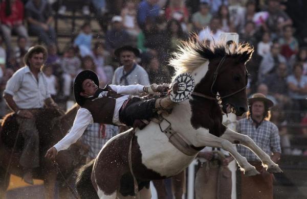 1146 της Νότιας Αμερικής Cowboys (15 φωτογραφίες)