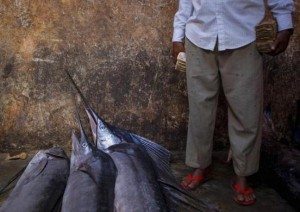 The Fishermen of Mogadishu (33 photos) 16