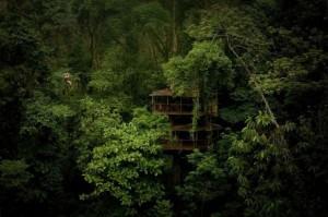 Finca Bellavista - a Treehouse Community (21 photos) 2