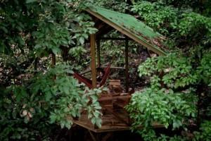 Finca Bellavista - a Treehouse Community (21 photos) 8