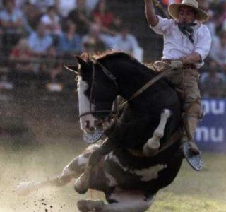 South American Cowboys (15 photos)