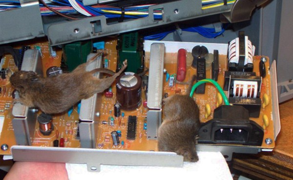 How did they even get into the power supply  We may never know.