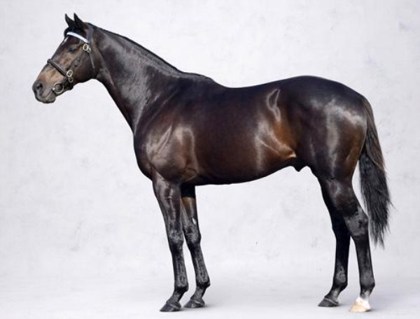 1016 Worlds Most Expensive Horses (10 photos)