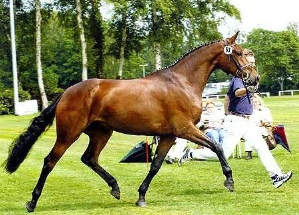 260 Worlds Most Expensive Horses (10 photos)