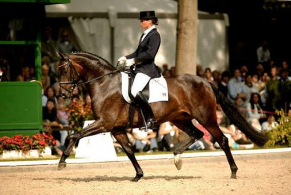 326 Worlds Most Expensive Horses (10 photos)