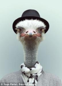 Fashion Zoo Animals (28 photos) 4