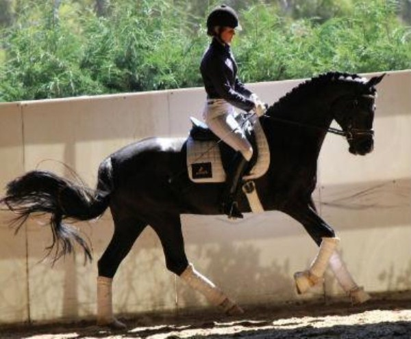 616 Worlds Most Expensive Horses (10 photos)