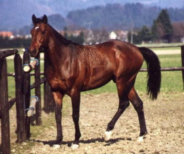 716 Worlds Most Expensive Horses (10 photos)