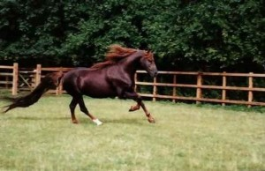 World's Most Expensive Horses (10 photos) 9