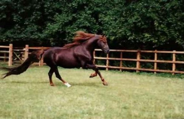 916 Worlds Most Expensive Horses (10 photos)