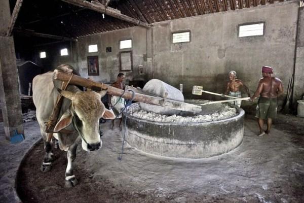 Σπαγγέτι 1146 στην Ινδονησία (18 φωτογραφίες)