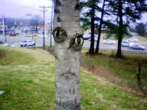 Things With Faces (55 photos) 32