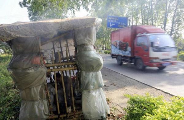 642 Μια κινεζική άνθρωπος που Μεταφέρει σπίτι του στην πλάτη του (12 φωτογραφίες)